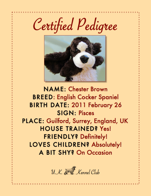 PEDIGREE - CHESTER BROWN - ENGLISH COCKER SPANIEL