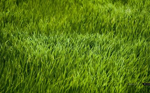 GUYBRARIAN - Grass